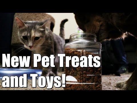 pet-toys-and-pet-treats---my-dog-and-cat-got-pet-gifts-from-the-amazon-wishlist