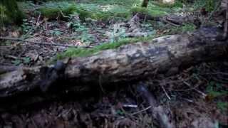Herping at Cultus Lake BC! ~ Western Redback Salamanders