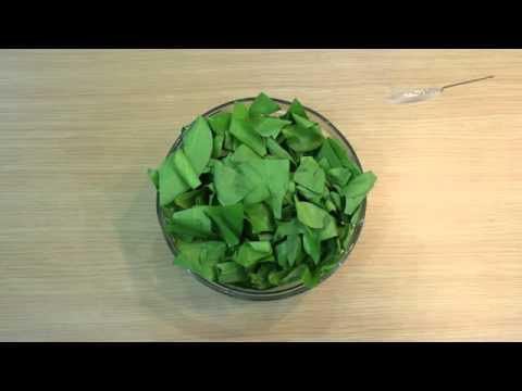 dapur-sehat-ku-cara-memasak-garo-bunga-pepaya-part1