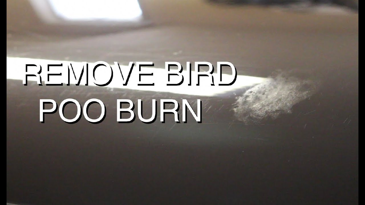 How to Remove Bird Dropping Stains from Clothes