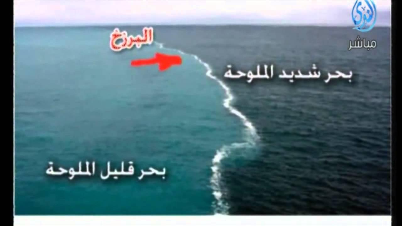 مرج البحرين يلتقيان العلماء ييستخدمون ألفاظ القرآن Youtube