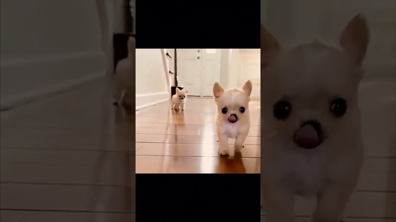 #Shorts de animales - dogs SOO Cute Just a relaxing video #60