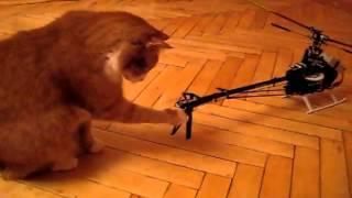 Кот и вертолет(Забавное видео, кот изучает вертолет., 2013-05-08T17:09:53.000Z)