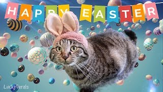Simba The Flying Easter Bunny Cat On An Egg Hunt! Happy Easter!