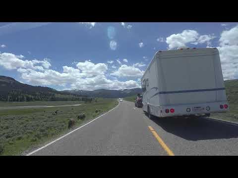Lamar Valley Bison - Yellowstone Nat'l Park