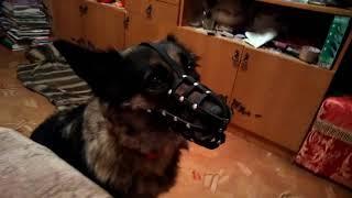 Обзор намордника для собаки