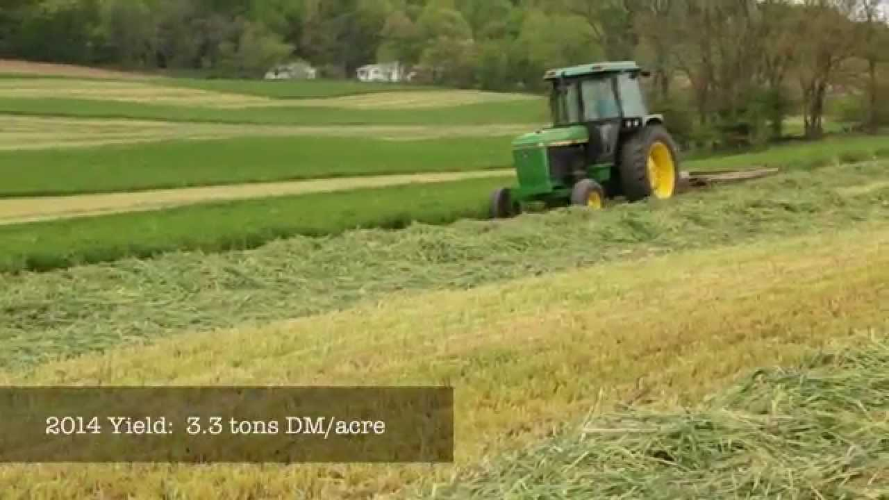 triticale cover crops for feed and soil health youtube