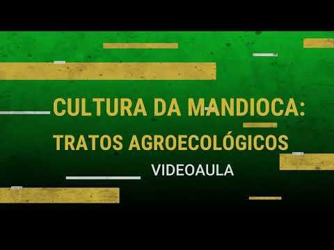 ATER A DISTÂNCIA_Cultura da Mandioca_Tratos Agroecológicos