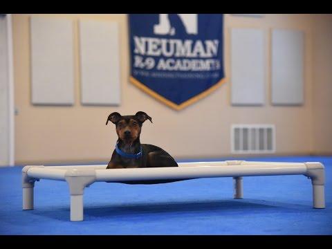 Blue (Miniature Pinscher) Boot Camp Dog Training Demonstration