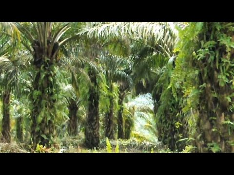 LIGNA 2013: Wood from Oil Palms: Usable in the End? (LIGNA-Journal)
