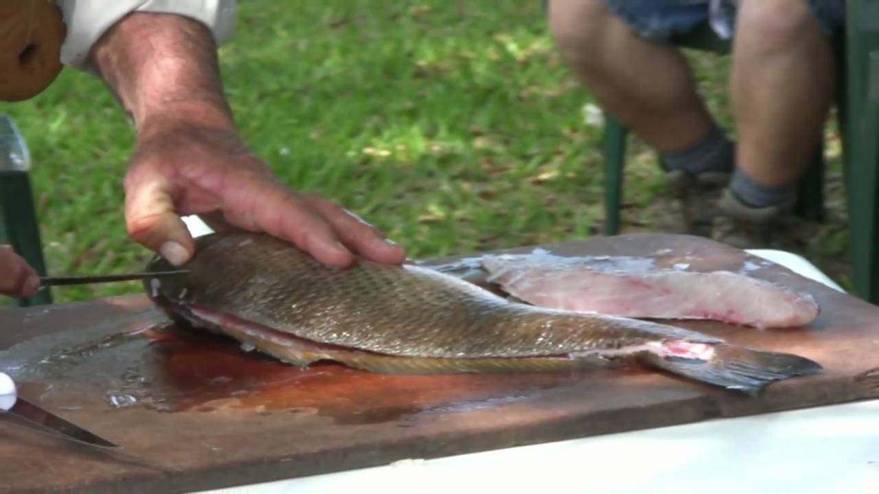 How to fillet a redfish youtube for How to cook red fish