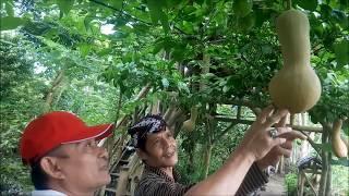 Video INDAHNYA BERBAGI PART 4 Tutorial Nature Stek Bunga dan Buah download MP3, 3GP, MP4, WEBM, AVI, FLV Juli 2018