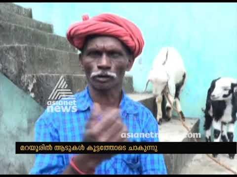 Mass goat deaths trigger panic among locals in Marayur