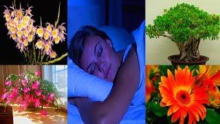 видео Минимальный уход за комнатными цветами и растениями, рекомендации.