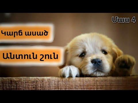 Կարճ ասած, անտուն շուն Մաս 4 [ Առաջին դեմքից ] / Karch asac, antun shun / GVTV Tube / #YouTubeAM