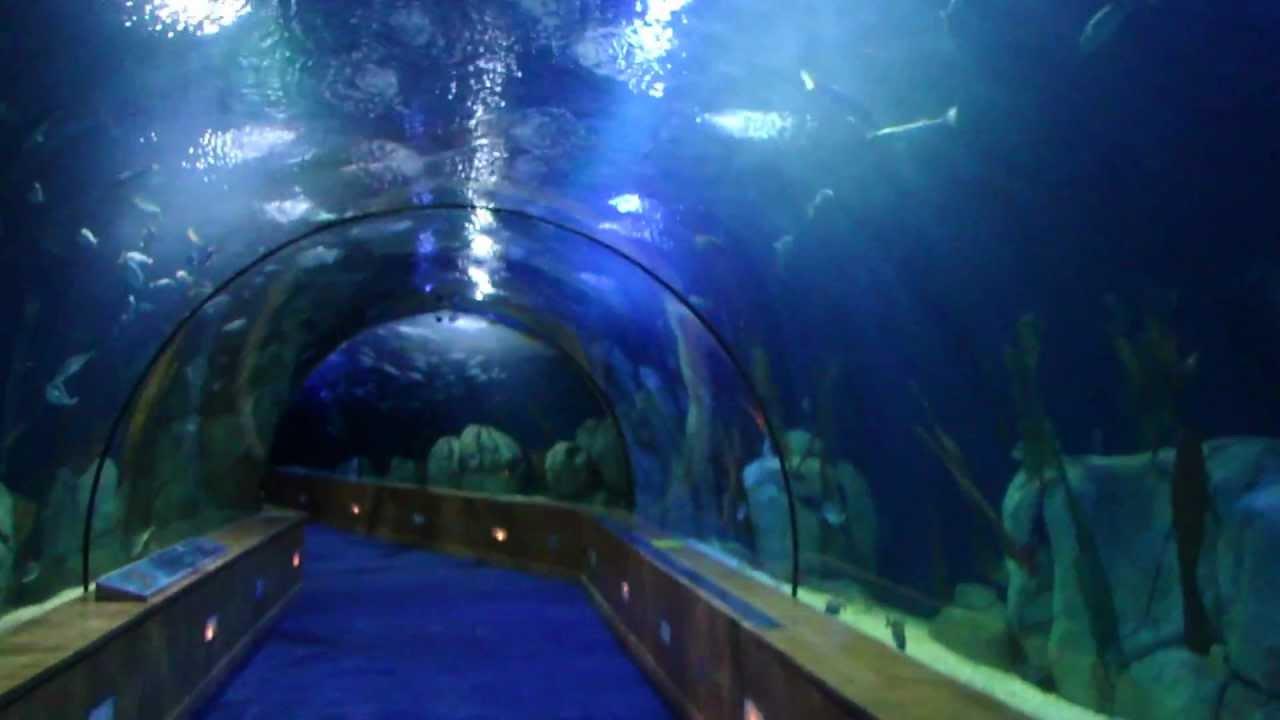 The largest aquarium in Europe- LOceanografic Valencia, Spain ...