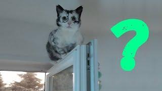 Что происходит с этой кошкой? Она становится похожей на сову! Раньше она была обычным котенком