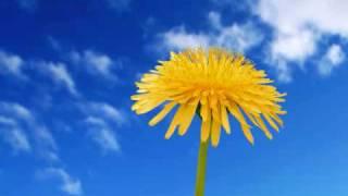 KIX・S - FLOWER & FLOWER ~はなとはな~