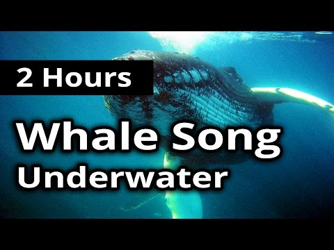 SOUNDS of WHALE SONG for 2 Hours - For Meditation, Concentration, Relaxation and Sleep.