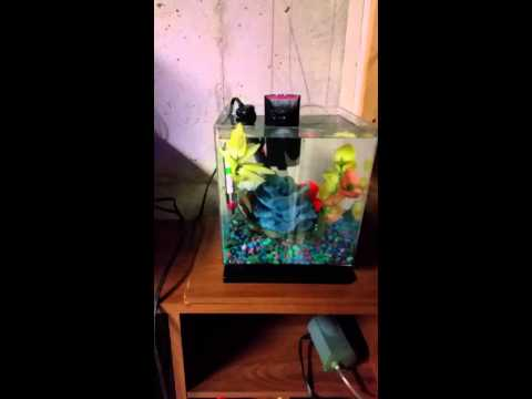 Moving my fish tank/ cycling my fish tank