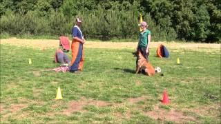 Attila de Alphaville Bohemia, 7months, mondioring training