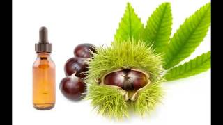 Horse Chestnut Oil & its health Benefits