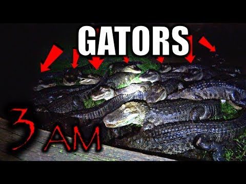 3AM CHALLENGE IN GATORLAND! (Ft. OmarGoshTV)