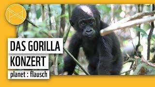 Das Gorilla Konzert | planet : flausch | planet : panda