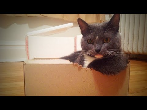 Funny Cats 😹 Funny and Cute Cats (Full) [Funny Pets]