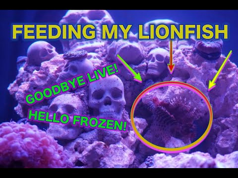 How My Lionfish Got Off LIVE Food | FROZEN FTW!!