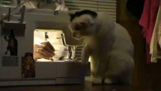 Смешные Кошки (Лучшие друзья девушек...) funny kitty cat videos
