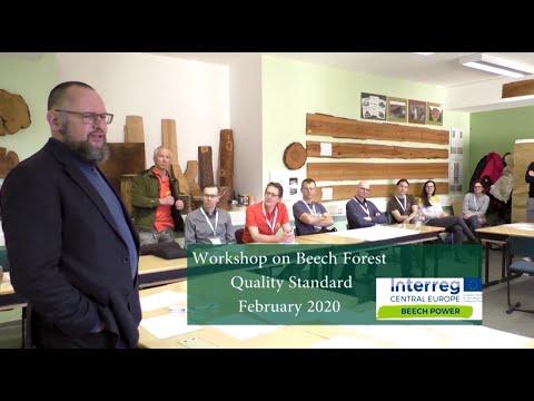 Mit Alten Buchenwäldern Regionale Entwicklung In Europa Stärken: Interreg-Projekt Beech Power