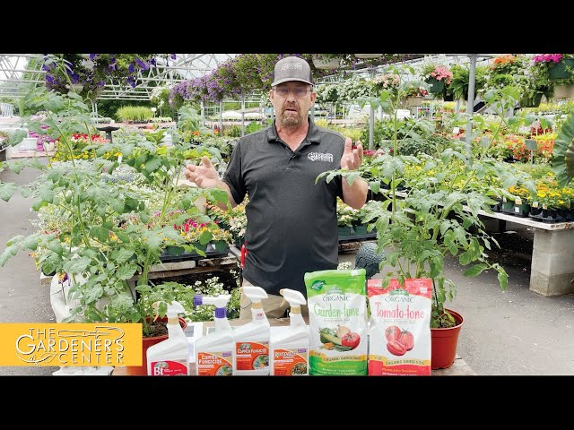 7/16/2021 Let's Talk Tomatoes With Sean