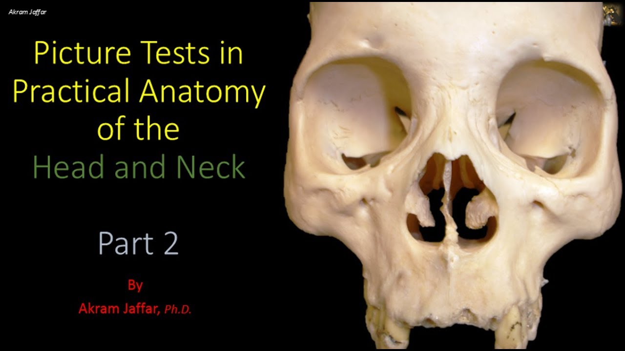 Picture tests in head and neck anatomy 2 - YouTube