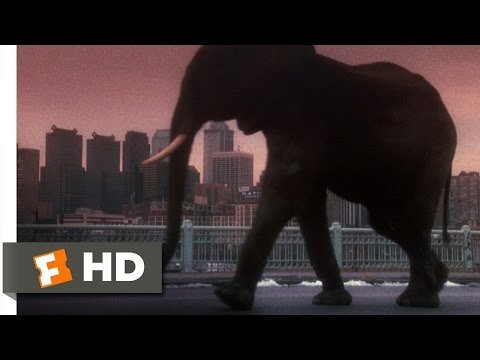 12 Monkeys (10/10) Movie CLIP - Zoo Animals Run Free (1995)