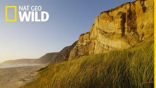 Olśniewająca Ameryka: Tajemnicza Kaskadia - oglądaj na Nat Geo Wild