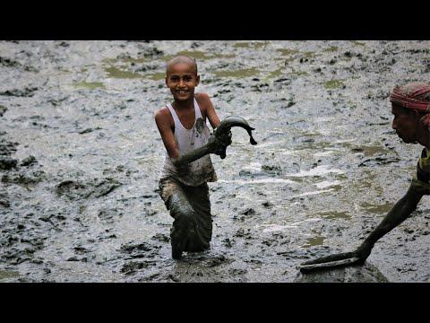 Dry Season Fishing ।  Fishing On Mud In The Village Pond । Village Food Fishing