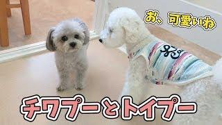 今のところ、おにぎりが一番人気です   犬のひみつきちホームページ:ht...