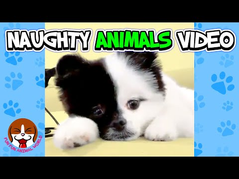 Naughty Animals Funny Things That Will Make You Laugh 🐱 Cute Animal Videos To Cheer You Up 🐶 #01