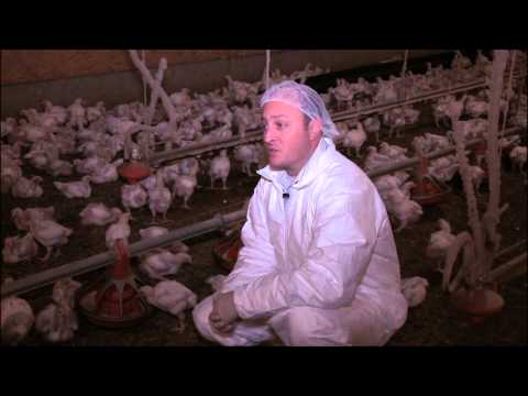 Antibiotic Use in the Poultry Industry