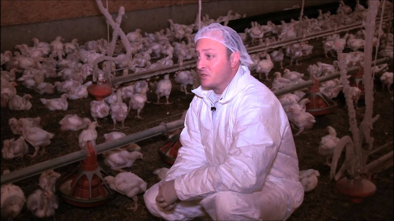 Questions and Answers about Antibiotics in Chicken Production