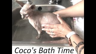 How to Bath Your Hairless Cat