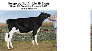 Finaliste Vache coup coeur 2018 : Bergeroy Goldwyn Ambiole