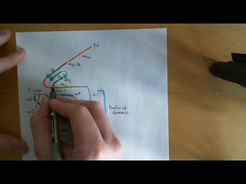 G-protein-couped receptors Part 4