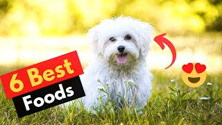 6 Best Dog Food for Maltese dogs | Which Food brand should you get?