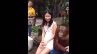 Animal Fun with beautiful girl