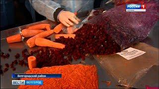 В Белгородском районе запустили производство по переработке овощей