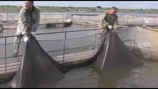 Две из трех банок с черной икрой на прилавках Тюмени - китайские