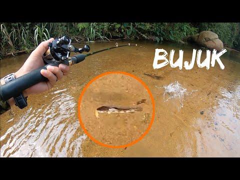 [BFS] Terlepas Bujuk Sungai | STRIKE Tengas Daun Dan Sebarau #Tengas