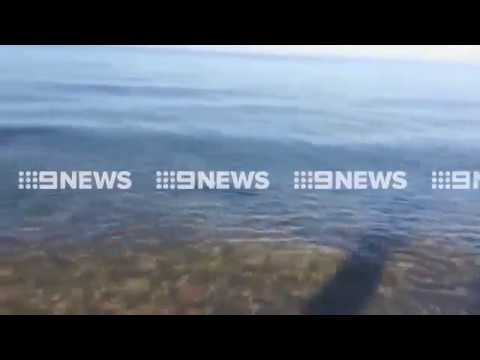 Shark spotted swimming at beach near St Kilda in Melbourne   Daily Mail Online